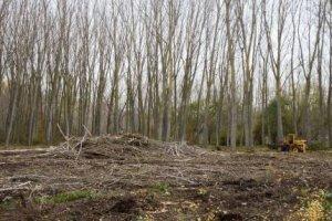 Básico para  Operador Florestal
