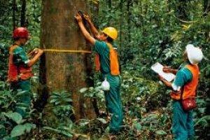 Cadeia de Responsabilidade Florestal (CdR) - PEFC