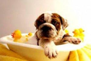Cosméticos para Pets