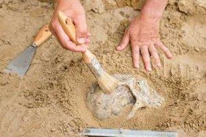 Asistente de Arqueólogo